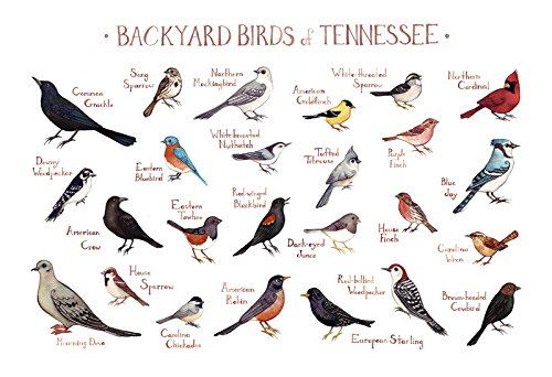Backyard Birds Of Tennessee Field Guide Art Print