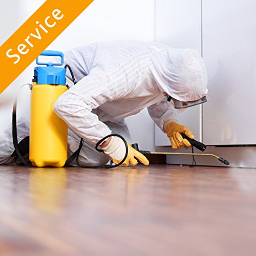 ant-treatment-2000-to-3000-sq-ft