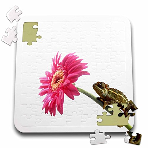 3dRose InspirationzStore Cute Animals - Baby Green Chameleon on hot Pink Gerbera Flower - Reptile Photography - Little Lizard - Chamaeleon - 10x10 Inch Puzzle (pzl_123121_2)