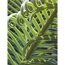 Palm Palms Plants Fern Ferns Notebook / Journal / Diary / Composition Book Large: 150 Ruled Pages for School, Office or Home - Softcover ? Great Gift