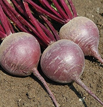 David's Garden Seeds Pelleted Seeds Beet Merlin D2758PA (Purple) 100 Organic Hybrid Seeds