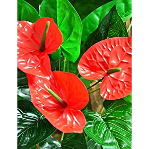 HUAHUA Artificial Flowers, Fashion Bouquets,Touch Simulation Anthurium Plastic Plants Artificial Flowers 100