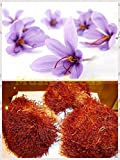 50pcs Crocus Sativus Seeds Home & Garden Bonsai Diy Flower Plant Semillas Flower Potted Saffron Purple White