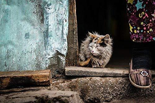 (Animal Window Mammal)