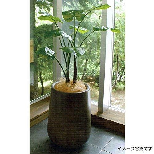 人工観葉植物 アーティフィシャルグリーンアレンジクワズイモ 鉢付き 幅70cm rg-012 B074FW298Z