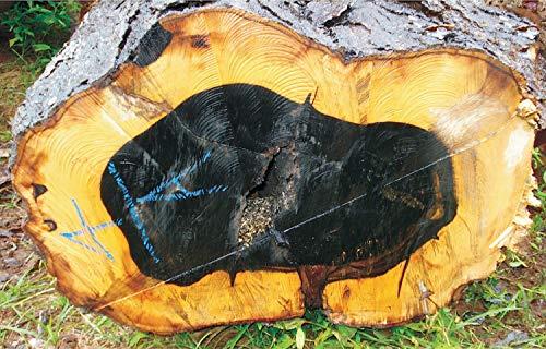 SEEDseller: Precious DIOSPYROS EBENUM or Ceylon Ebony Black Wood Tree Seeds for Growing (10 Seeds)