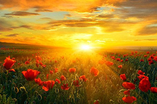 Bright New Day Field of Poppies at Sunrise Landscape Photo Art Print Poster 36x24 inch