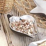 Zingz and Thingz Sea Conch Decorative Dish