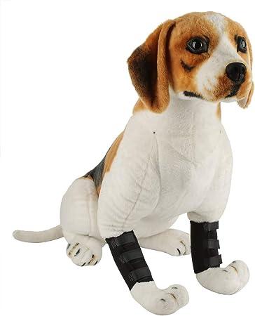 beagle knee brace