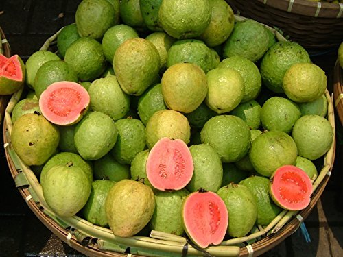 15+ Seeds (* 15 DWARF PINEAPPLE/STRAWBERRY GUAVA SEEDS ** #1080)