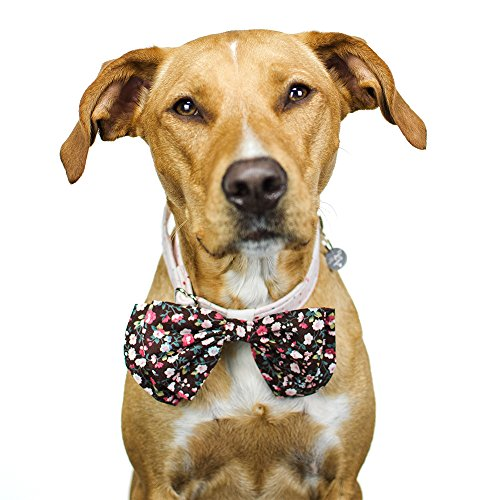 - Tail Trends Dog Floral Bow Tie Collar Slider for Teacup to Medium and Large Breeds (L)