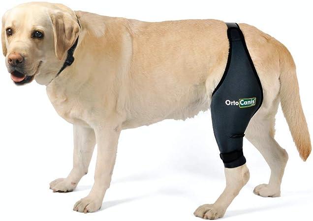 dog leg brace for acl tear