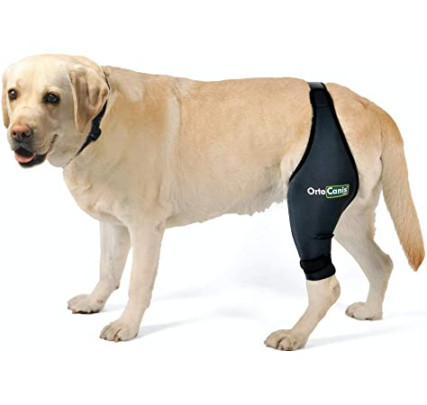 kruuse dog knee brace