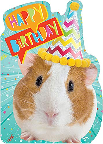Paper House Guinea Pig in Birthday Hat Die Cut Foil Cute Birthday Card for Kids