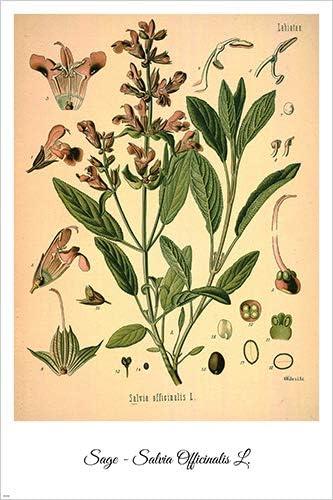 Comfrey Vintage Botanical Floral Illustration Art Poster 24x36