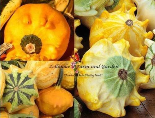(Shenot's Crown of Thorns Gourd Seeds by Zellajake Many Sizes Ten Commandments 93 Superior Quality)