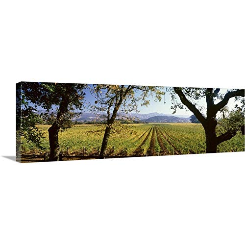 GREATBIGCANVAS Gallery-Wrapped Canvas Entitled Vines in a Vineyard, Far Niente Winery, Napa Valley, California, by 60