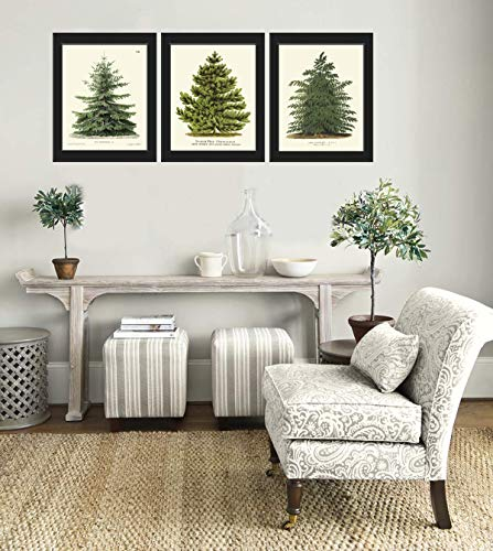 Pine Tree Christmas Trees Print Set of 3 - Unframed - Beautiful Botanical Nordmann Fir or Caucasian Fir Norway Spruce and Japanese Larch Home Room Holiday Decor Wall Art