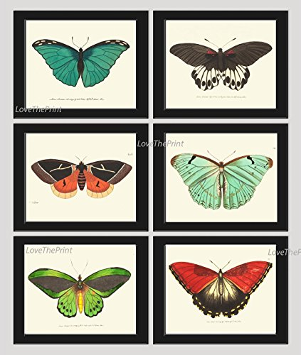butterfly-print-set-of-6-prints-antique-art-beautiful-colored-colorful-aqua-red-green-ivory-backgrou