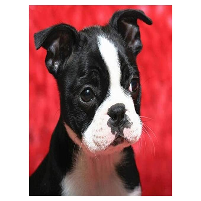 Aphila 5D Diamond Painting Kits for Adults and Beginner Full Drill Round Resin Rhinestone Embroidery Diamond Cross Stitch Arts Craft Supply Home Wall Decor Gift 10x12inches,Boston Terrier