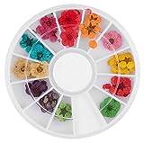 ROOMZOOM 1pcs x 12 Color Wheel Dried Dry Flower Nail Art Decorations set Acrylic False Tips Nail Art Salon