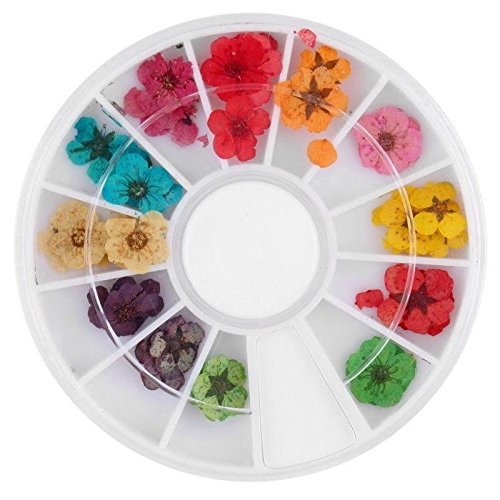 ROOMZOOM 1pcs x 12 Color Wheel Dried Dry Flower Nail Art Decorations set Acrylic False Tips Nail Art Salon