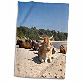 3D Rose Cows-Farm Animal-Coffee Bay-Transkye-South Africa-Af42 Mwr0126-Micah Wright Hand/Sports Towel, 15 x 22
