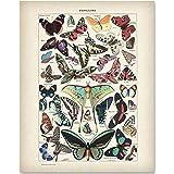 Butterflies Illustration - 11x14 Unframed Art Print - Makes a Great Gift Under $15 for Bathroom Decor