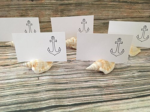 Strombus Seashell Placement Card Holders, 5 (Shell Strombus)