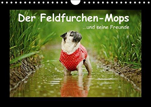 Der Feldfurchen-Mops (Wandkalender 2016 DIN A4 quer): ...und seine Freunde (Monatskalender, 14 Seiten) (CALVENDO Tiere)