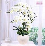 XPHOPOQ Piante in vaso in stile europeo fiori artificiali orchidee camera Decoration fiori finti Bianco