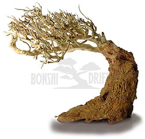 Bonsai Driftwood Random Pick Aquarium Decoration Tree, Moss Tree, Aquarium Driftwood Tree, Aquarium Tree (6 Inch Height) Natural, Handcrafted Fish Tank Decoration | Helps Balance pH by Bonsai Driftwood