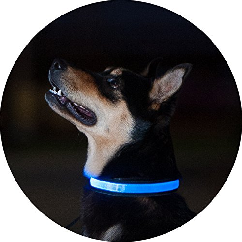 Light Up LED Dog Collar by FurSafe | Bright | Water Resistant | Safe (Blue, Small)