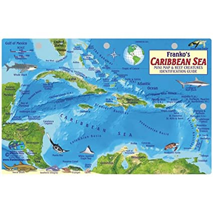 Amazon.com : Caribbean Sea Fish Id Card with Island Map 8.5 in by ...