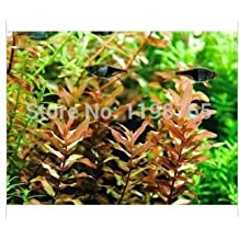 100pcs 22kinds Java Fish Tank Fern Aquatic Seeds + secret gifts, Moss-Live Aquarium Plant, Bonsai plant seeds, 49%