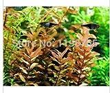 100pcs 22kinds Java Fish Tank Fern Aquatic Seeds + secret gifts, Moss-Live Aquarium Plant, Bonsai plant seeds, 49%