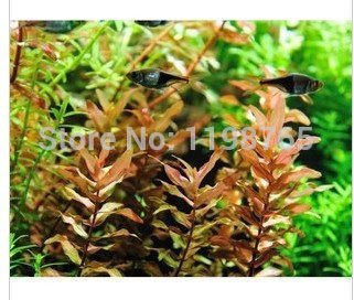100pcs 22kinds Java Fish Tank Fern Aquatic Seeds + secret gifts, Moss-Live Aquarium Plant, Bonsai plant seeds, 49% SVI