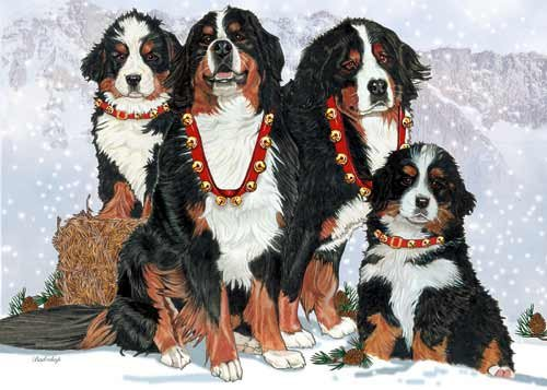 Family Cellars (Bernese Mountain Dog Christmas Cards Entire Family : 10 Holiday Cards with Envelopes)