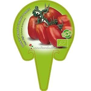 Tomate Pera de porte rastrero - Maceta de 10,5cm - ECO