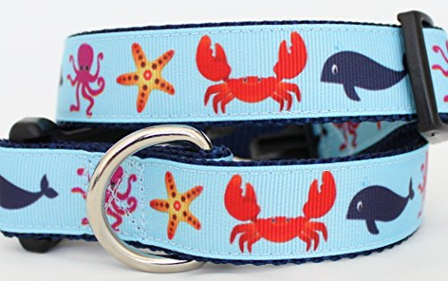 Beach Biscuit Crab Whale 1