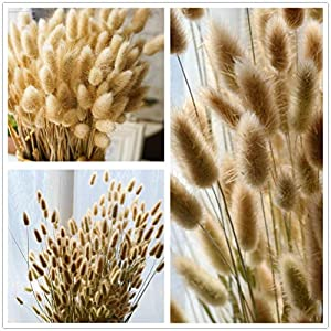 """50 Pcs Natural Dried Small Pampas Grass, Phragmites Communis, Foxtail Grass, Rabbit Dog Tail Grass, Dry Bouquet, Wedding Flower Bunch, 14""""-17"""" Tall Home Décor 5"""