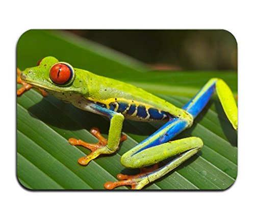 Poison Frog Fancy Doormat Accent Non-Slip Rug For ()
