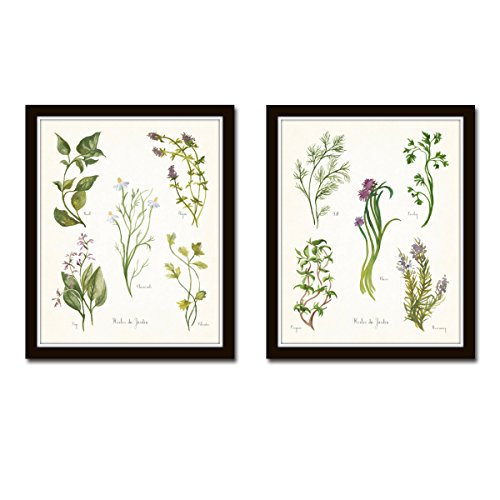 Watercolor Herbs Print Set No. 5 - 2 Giclee Fine Art Prints - (Country Transitional Five Light)