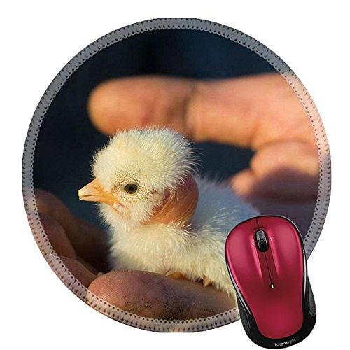 Game Bird Hatchery - 5