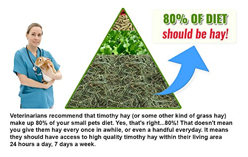 Small Pet Select 2nd Cutting Timothy Hay Pet Food, 8-Pound by Small Pet Select (Image #8)