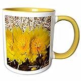 3dRose VWPics Flowers - Barrel Cactus flowers.(Ferocactus acanthodes).Anza-Borrego Desert State Park, California - 11oz Two-Tone Yellow Mug (mug_45948_8)