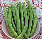 Bean, Pole Kentucky Wonder Seeds, Organic, NON-GMO, 20+ seeds per package,Hearty Healthy Green Been