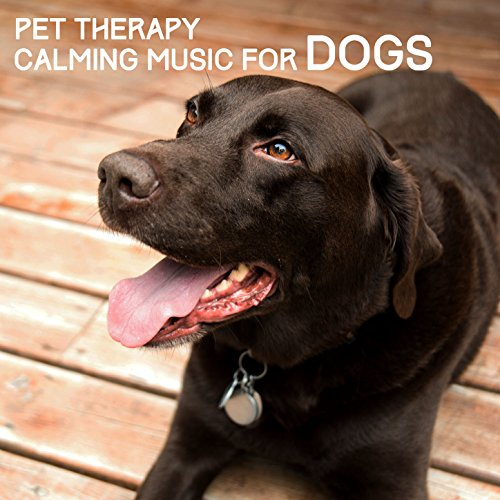 Pet Therapy Calming Music Dogs