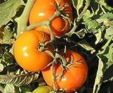 20 seeds Organic, Heirloom Caro Rich Tomato Seeds