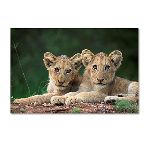 (Two Lions by Robert Harding Picture Library, 16x24-Inch Canvas Wall Art )